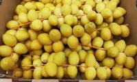 YellowBarhiDate5.jpg